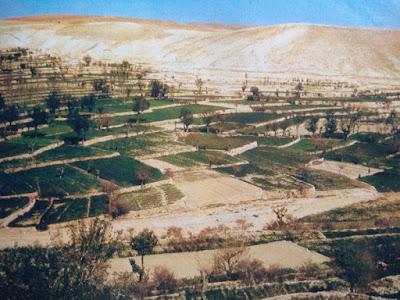 Foto Daerah pertanian di negara Suriah