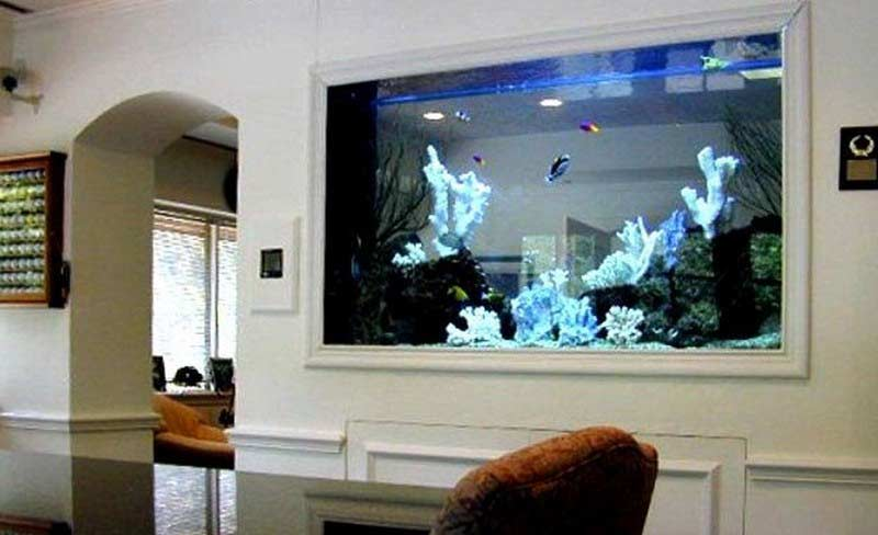 How To Make Wall Aquarium And Wall Fish Tank Diy