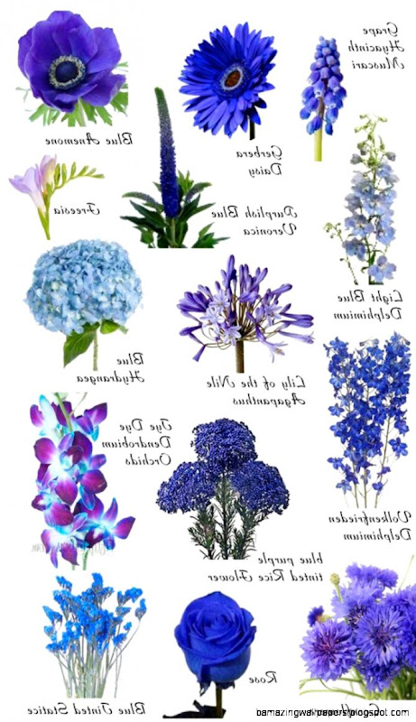 Names Of Blue Flowers