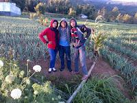 Kebun Malino