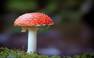 Mushroom Paradox Risk and Benefit of Eating