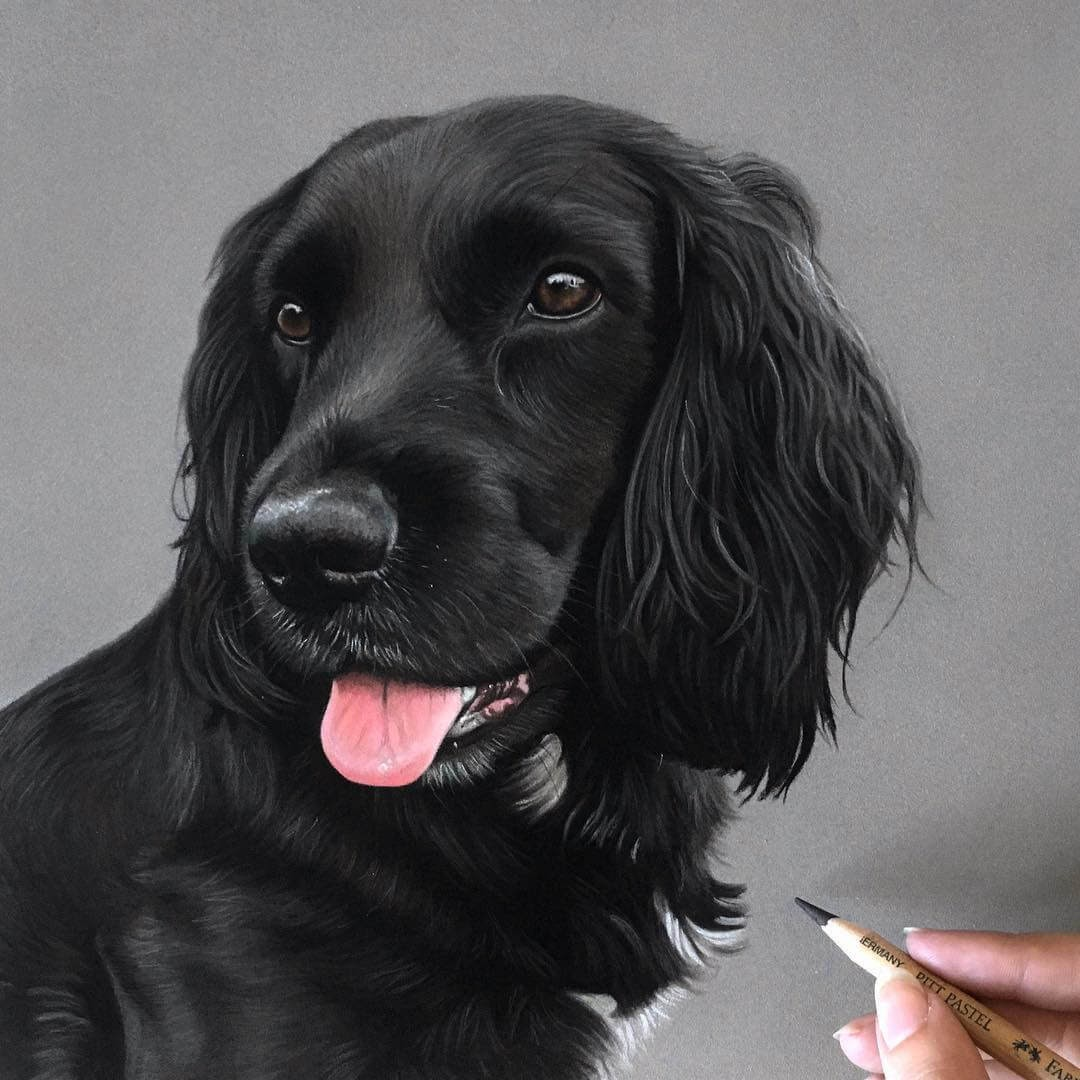 04-Dougie-the-Cocker-Spaniel-Danielle-Fisher-Dog-Portraits-with-Pastel-Drawings-www-designstack-co