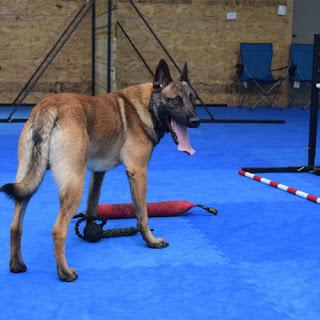 Greatmats dog agility foam tiles floor interlocking