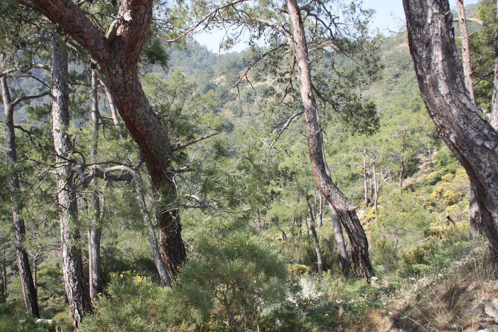 певица фотоотчет текирова ликийская тропа позволяют
