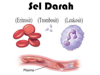 sel darah, Sel darah merah (Eritrosit), Keping darah (Trombosit), Sel darah putih (Leukosit)
