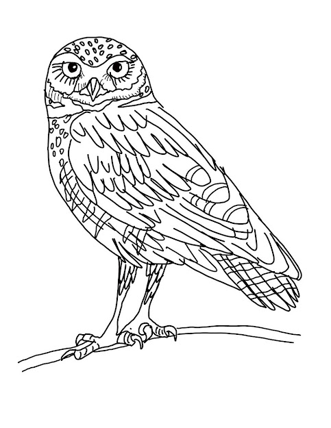 Owl Coloring Page Clipart Free Printable Owl Coloring Page