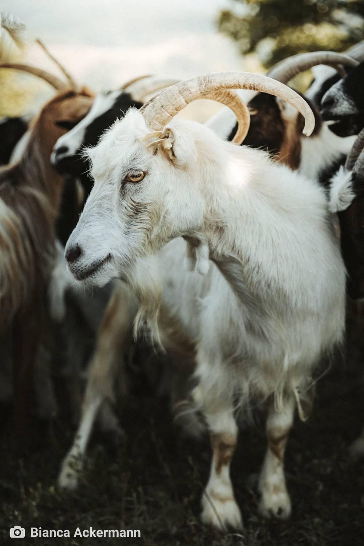 ambiente de leitura carlos romero emerson barros de aguiar Aragon Navarra Pais Basco via lactea Cantabria Asturias bairrismo sidra cabras
