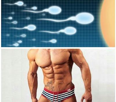 kesehatan sperma pria