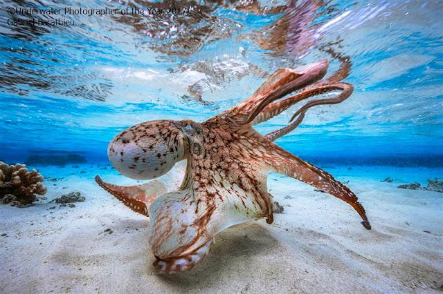 Imagens subaquáticas como você nunca viu premiadas pelo Concurso UPY 2017