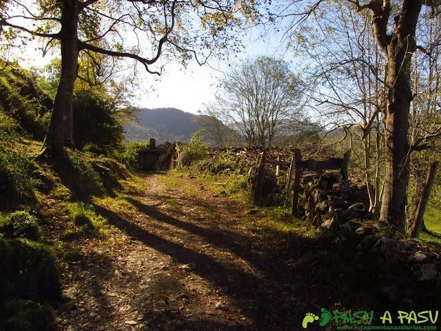 Cabañas en la ruta del Bosque de Cea