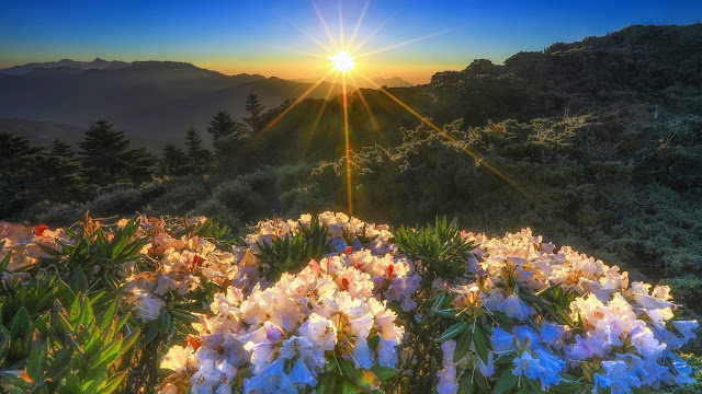 natura, fiori, campo fiorato, montagne,