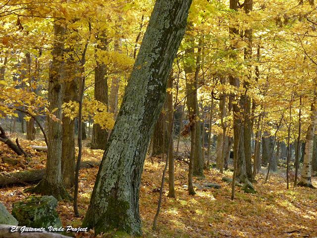 Bosques de Wellesley Island State Park, NY por El Guisante Verde Project