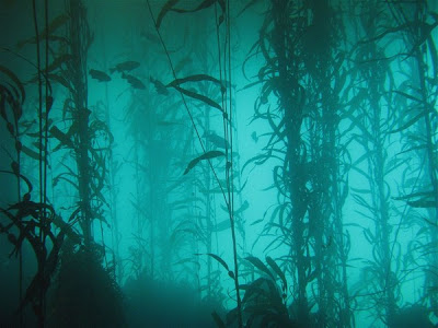 Ősi víz alatti erdőt találtak a Mexikói-öbölben