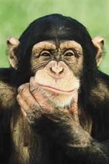 simpanz - Jak probíhá tvorba osobního vnímání světa