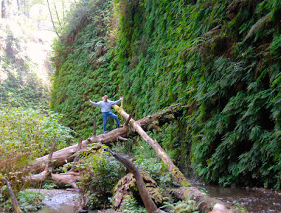 Wayne Dunlap Fern Canyon Redwood National and State Park California