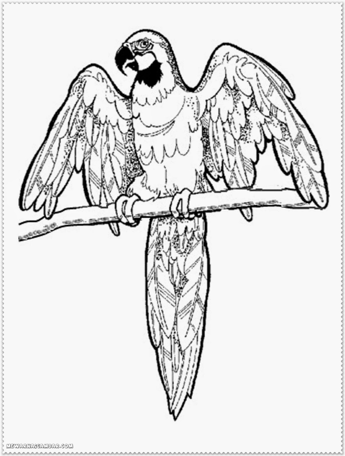 Australian Bird Coloring Pages