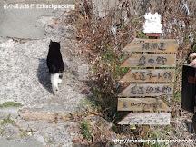 尾道的貓之細道: 在山尾之道和真假貓咪捉迷藏