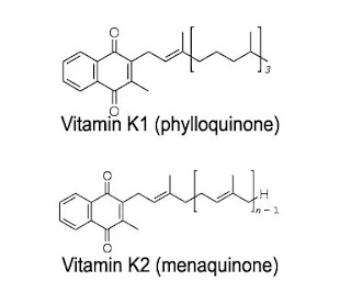 Fungsi Vitamin K Dan Kegunaan Bagi Tubuh