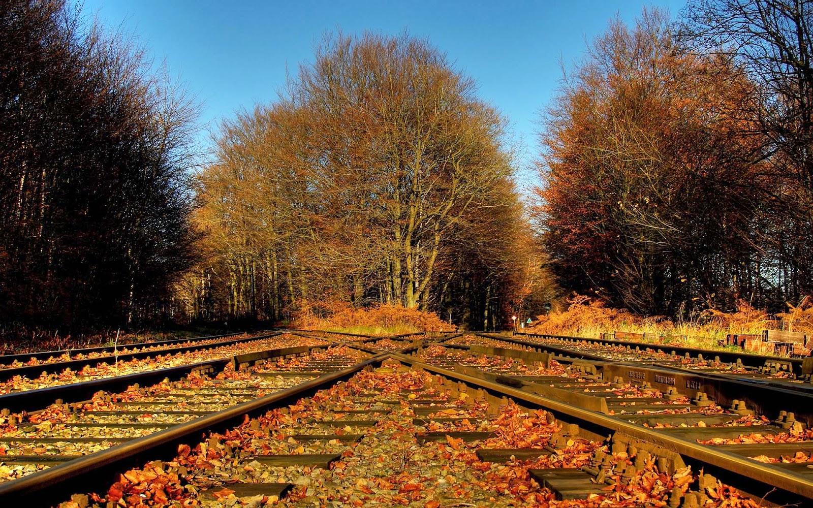 Herfstbladeren op het spoor