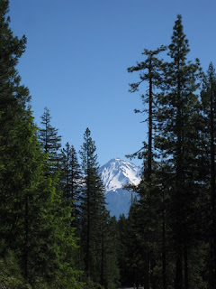Snowy top of Mt. Shasta framed by tall evergreens, W A Barr Road, Mt. Shasta, California