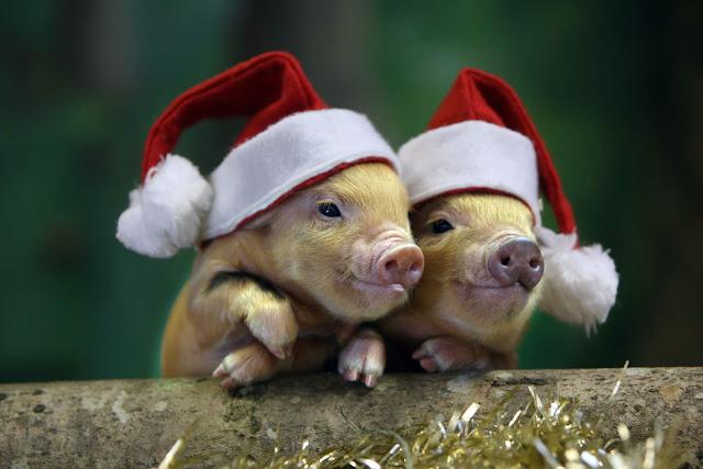 Feliz navidad para TODOS, familiares, amigos, vecinos, animales y el planeta en general. Celebremos estas fechas con amor, fraternidad, solidaridad y compartamos en familia una maravillosa cena que no incluya dolor y crueldad.