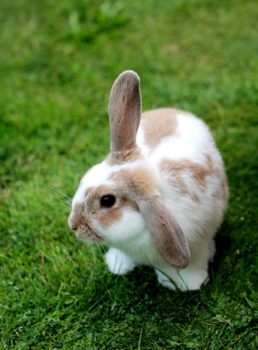 Cute Brown Rabbit Wallpaper Free Download Wallpapers Epic