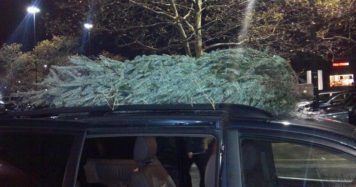 Christmas Tree On Car Roof