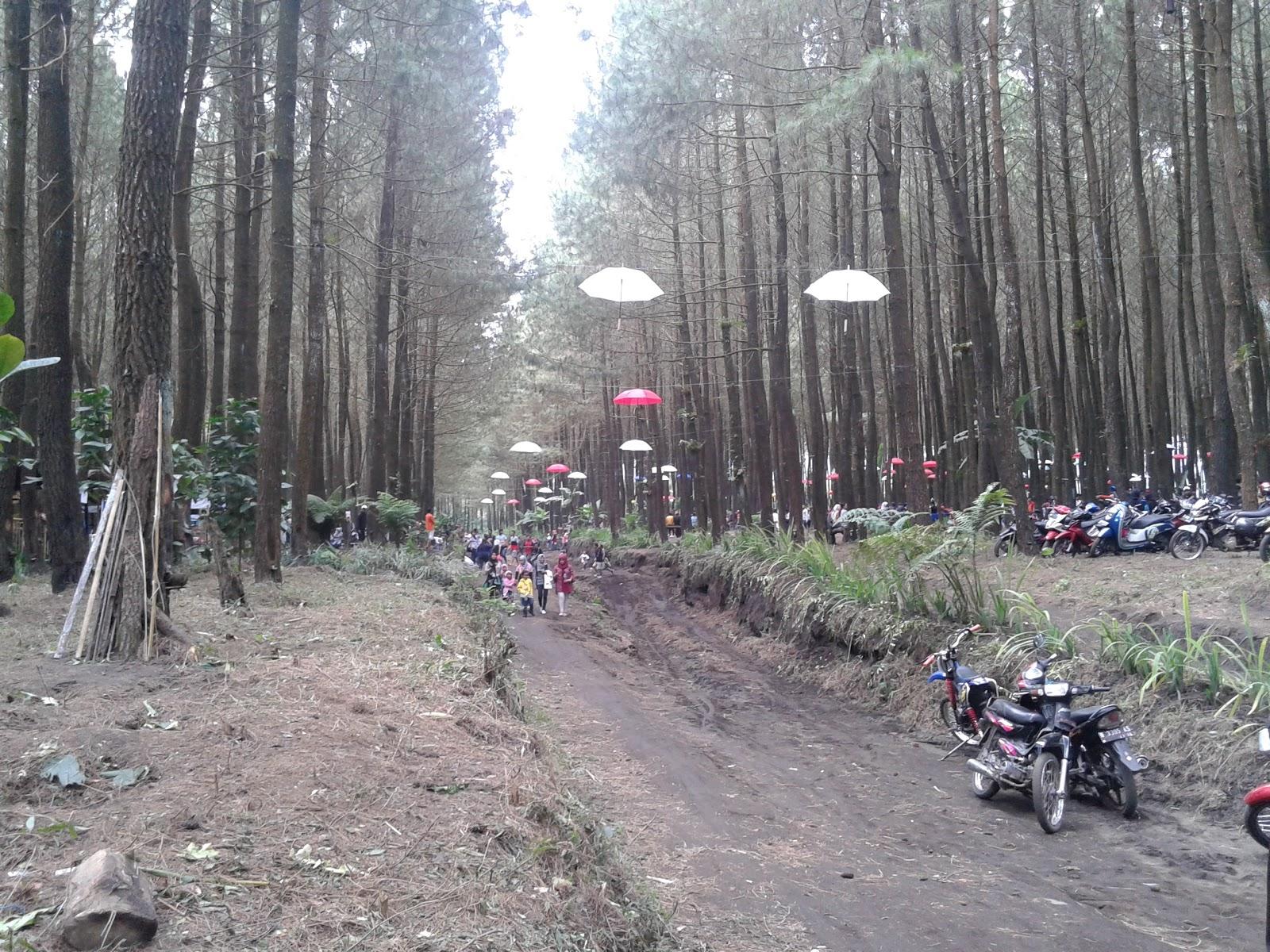 Managament And Journal Wisata Alam Baru Hutan Pinus Semeru Desa
