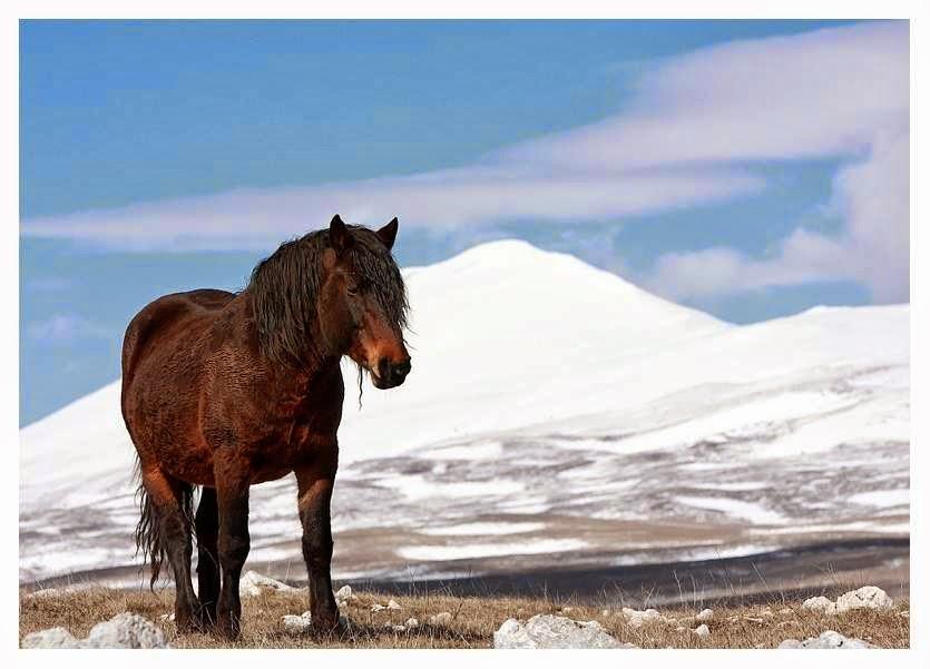 Foto caballo en la alta montaña  silvestre