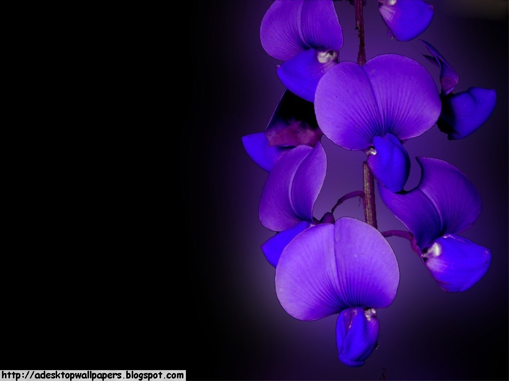 orchid wallpapers backgrounds images - photo #38