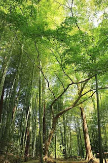 Role of Forest in Controlling Flood