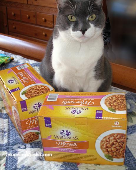 Cat Suddenly Develops Food Allergy