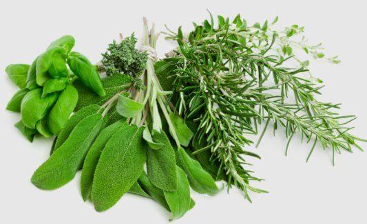 najlepsze zioła oczyszczające organizm z toksyn