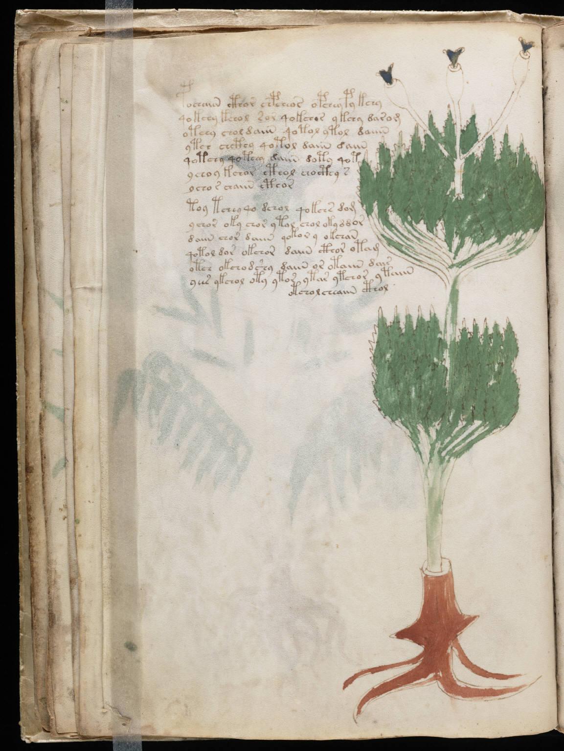 manuscrito038