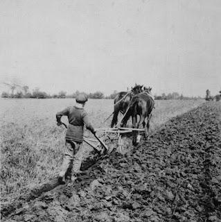 A boy ploughing, Manitoba, c. 1900