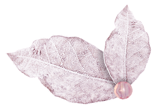 Flowers and Leaves of the Baby Girl Bear Clipart.