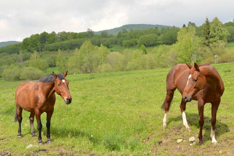 Wołosate. Konie Huculskie bieszczady konie stadnina