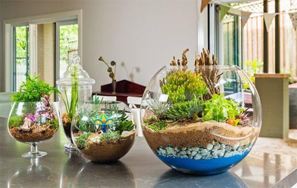 mini jardim de inverno:Construindo Minha Casa Clean: Mini Jardim de Inverno – Veja como Fazer