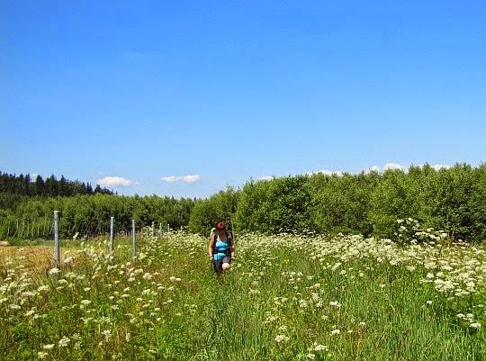 Często przedzieramy się przez zarośnięte łąki.