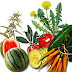 My Personal Diuretic Foods Diet
