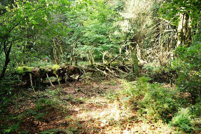 Am Wegesrand liegt ein umgestürzter und teils schon wieder bewachsener Baum