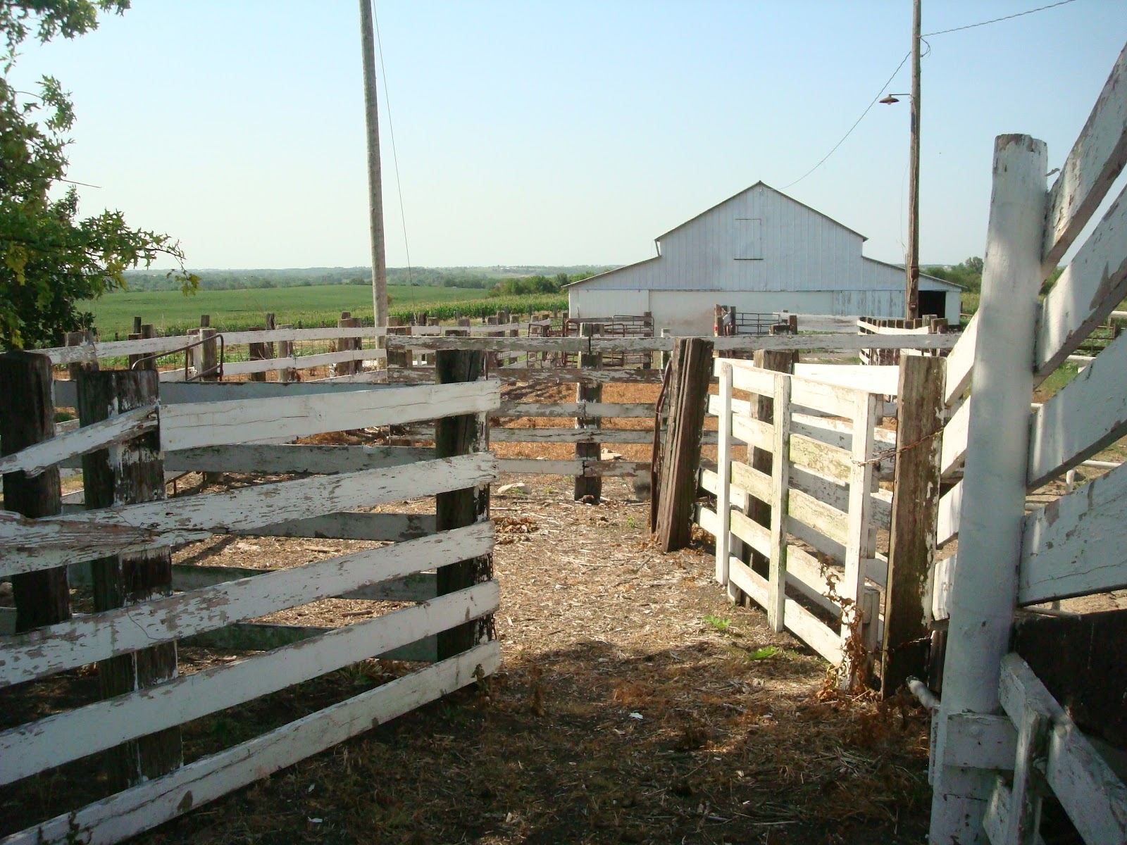 Born To Pharm Building A New Cattle Corral