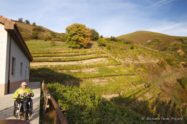 Viñedos de Anton Chicote - Cangas del Narcea, por El Guisante Verde Project