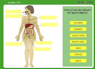 http://www.bromera.com/tl_files/activitatsdigitals/Natura_6v_PA/natura6_val_u01_pag09.swf
