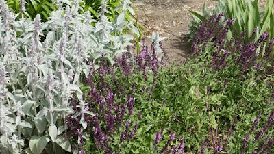 Maple Creek, Saskatchewan, garden, landscape, plant, dryland