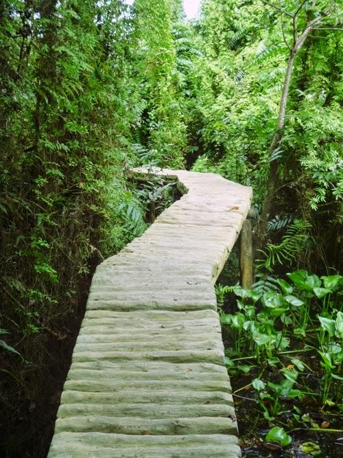 Con đường xuyên rừng tại khu du lịch Xẻo Quýt