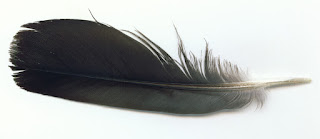 Bird Pigeon Wing