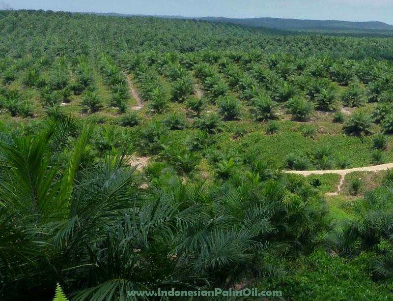 pabrik kelapa sawit di kabupaten singkil aceh tak punya tangki cpo
