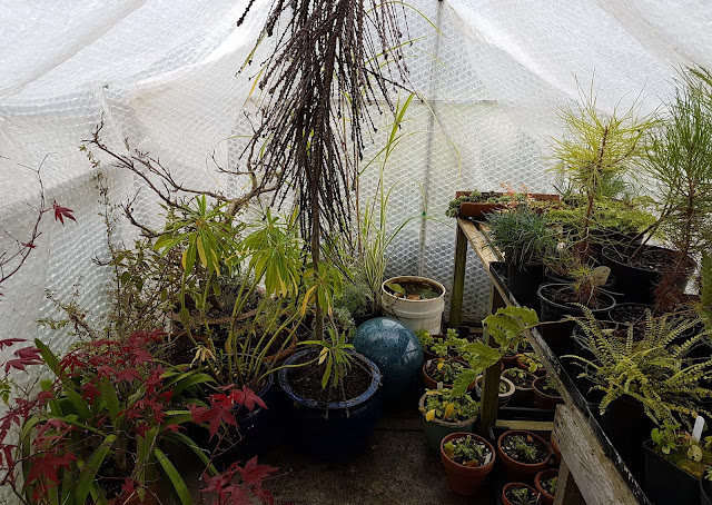 The wee greenhouse is filling up