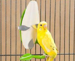 Pakan Lovebird yang Baik dan Sehat
